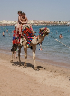 Camel Beach Guide – Bodrum Holidays