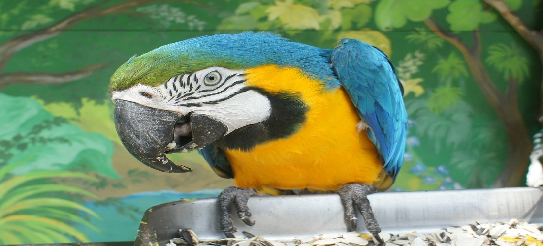 Parrot at Loro Parque attraction in Tenerife