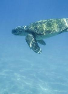 Things to do at Palma Aquarium