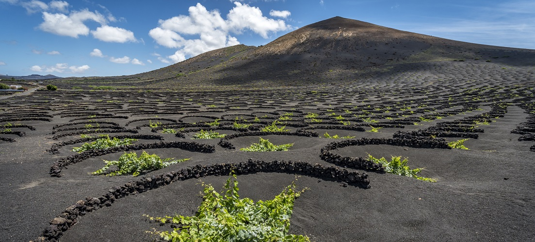 things to do in lanzarote volcanic vineyard